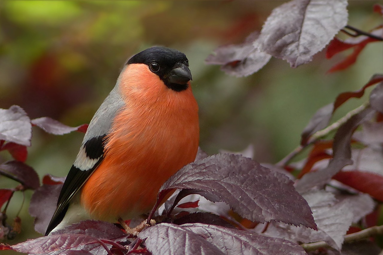 Ptaki Miejskie Cz1 Apoczywajpl
