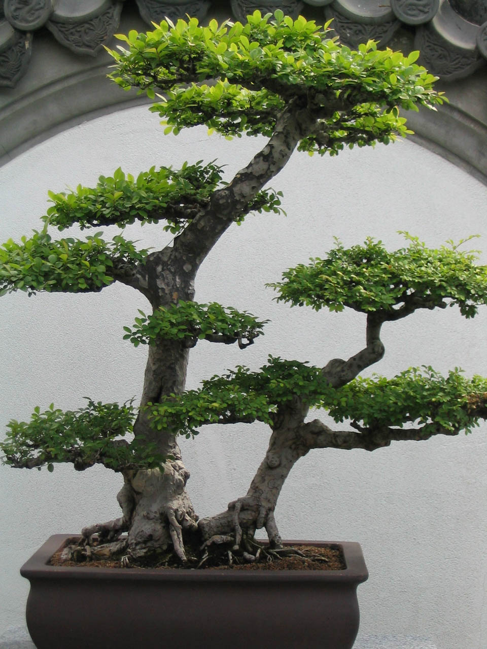 Bonsai - Miniaturowe Drzewa I Krzewy